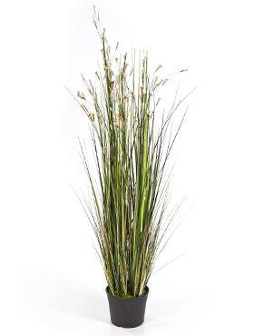 Grass coral