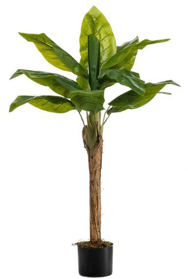 Bananenboom zijdeplant