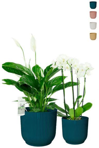 Bloeiende kamerplanten 1