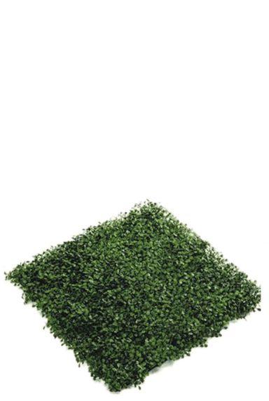 Buxus plant mat nepplant
