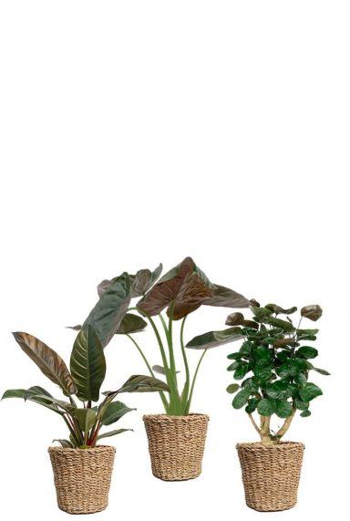 dunkelgrune Pflanzen im Korb