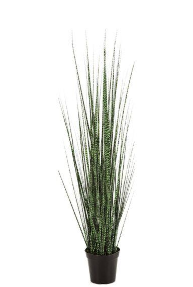 Grasplant nepplant siergras