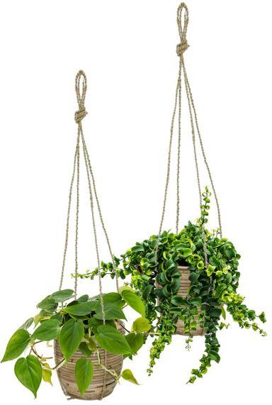 Hangplanten in hangpot 1