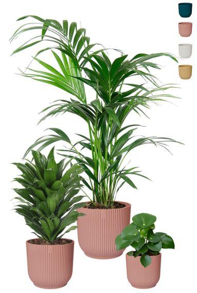 Kamerplanten in elho potten