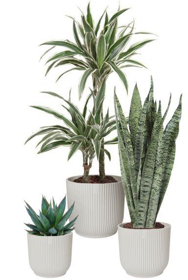 Kamerplanten in witte potjes