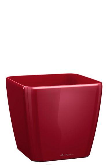 Lechuza quadro rood 35