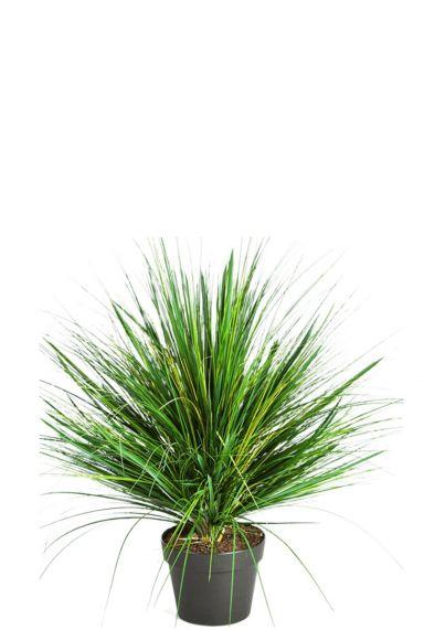 Nepplant gras kunstgras