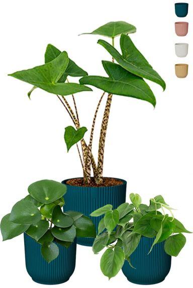 Plantjes in elho potjes1