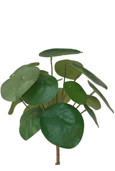 Pilea pannenkoekplant