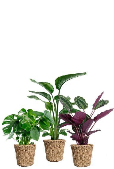 Planten in mandjes