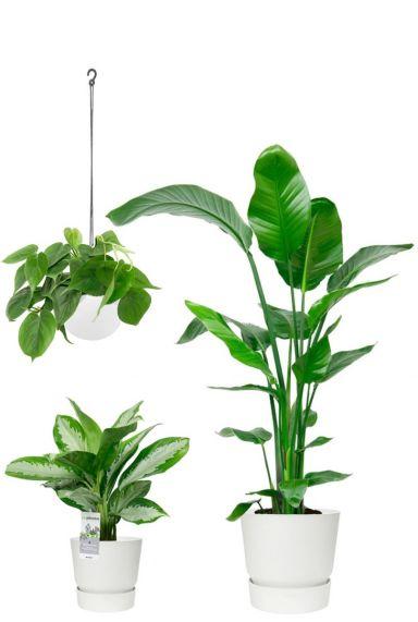 Plantenpakket kamerplanten