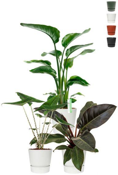 Populaire planten in elho potten