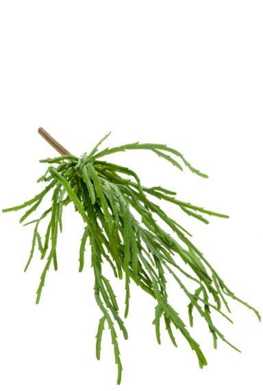 Rhipsalis kunstplant