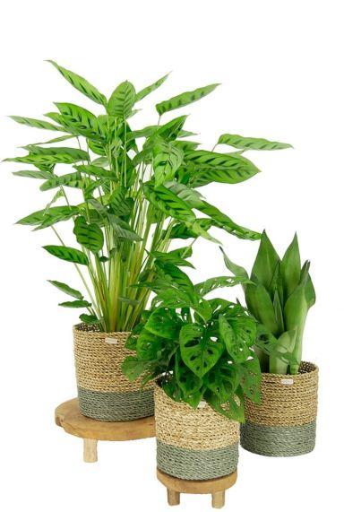 Schaduw kamerplanten