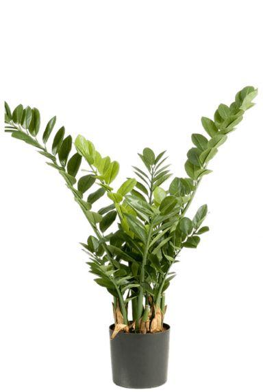 Zamioculcas kunstplant
