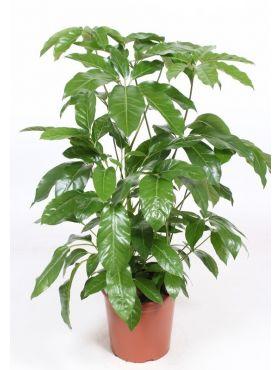 Zimmerpflanzen Geeignet Für In Die Volle Sonne 123zimmerpflanzen