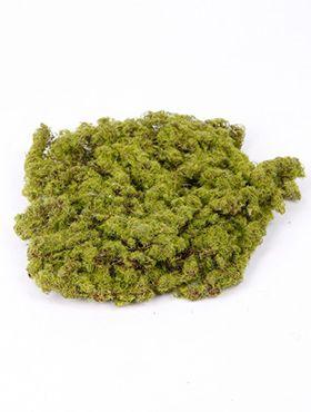 Moss plate