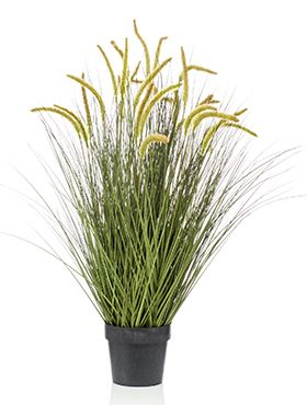 Grass cattail