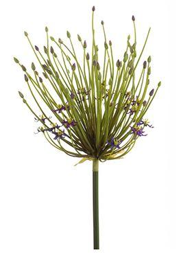 Allium double flower spray