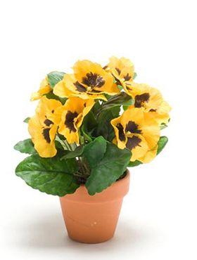 Pansy yellow