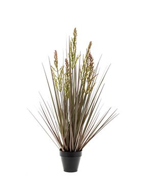 Rumex grass