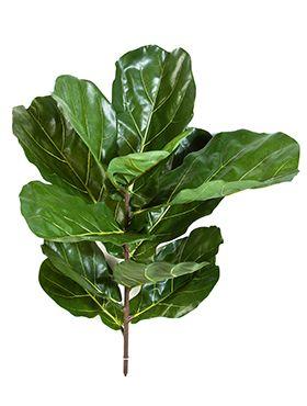 Fiddle leaf spray