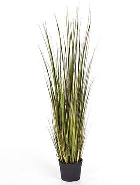 Grass bamboo
