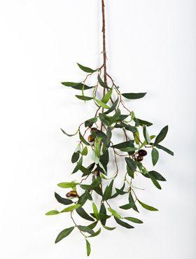 Olive spray