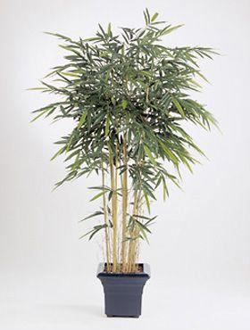 New natural bamboo