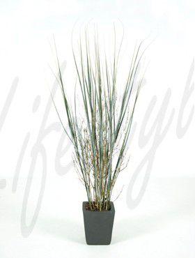 Gras Pflanz Bambus