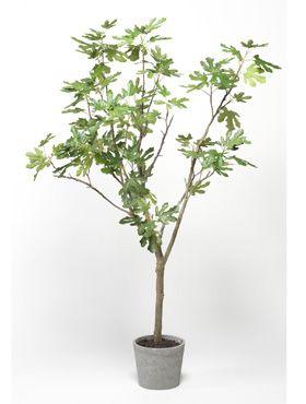 Feigebaum