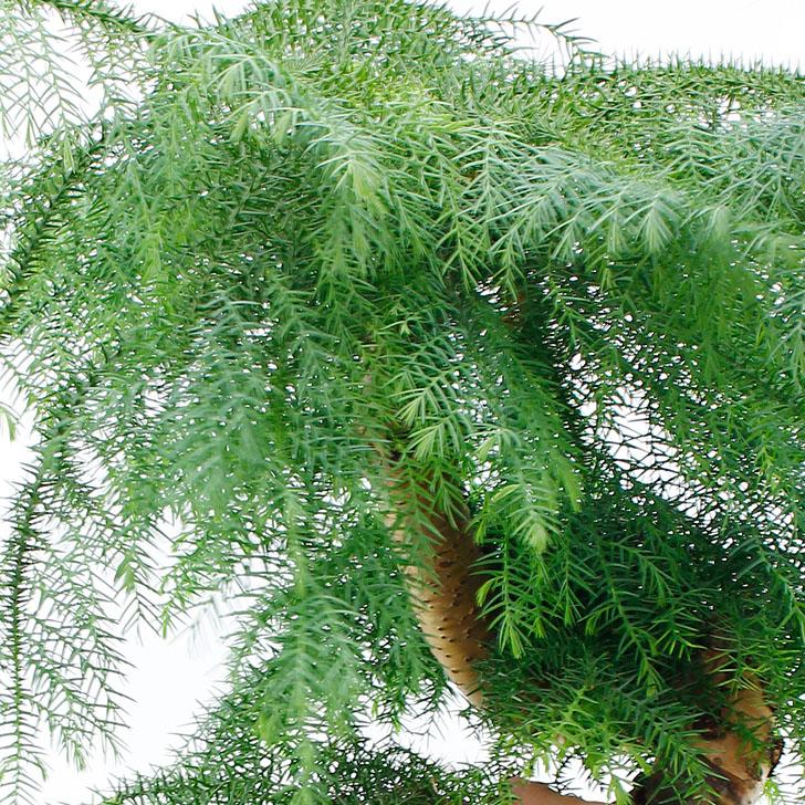 Zimmerpflanzen Lexikon 123zimmerpflanzen