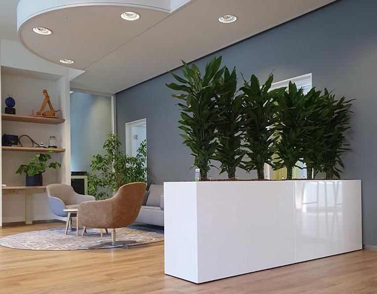 Büropflanzen kaufen