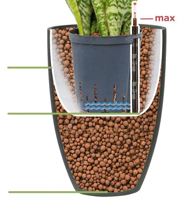 Hydrokultur einpflanzen