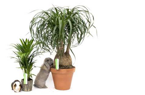 Ungiftige zimmerpflanzen kaufen - Giftige zimmerpflanzen ...