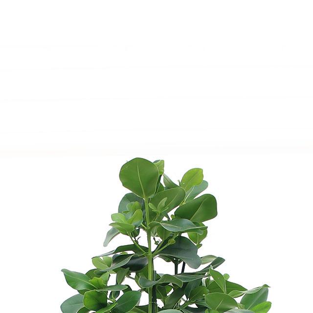 Hydrokultur 90 - 120 cm