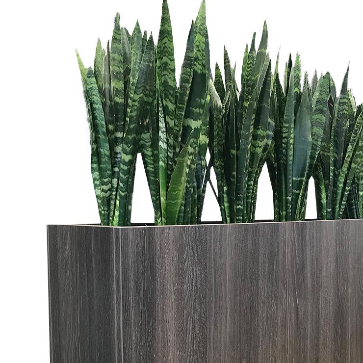 Sansevieria-schattenpflanzen-Pflanzgefäße