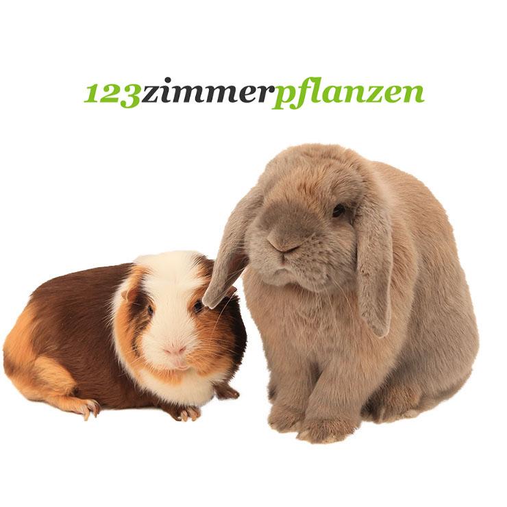 Meerschwein und Kaninchen