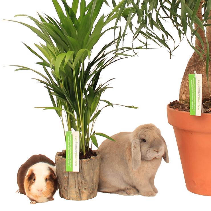 Haustierfreundliche Zimmerpflanzen