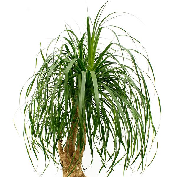 Zimmerpflanzen geeignet für in die volle Sonne - 123zimmerpflanzen