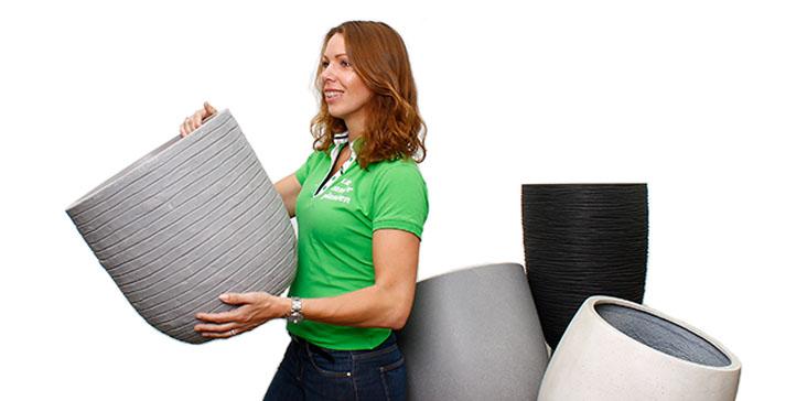 123zimmerpflanzen online zimmerpflanzen und pflanzgef e kaufen. Black Bedroom Furniture Sets. Home Design Ideas
