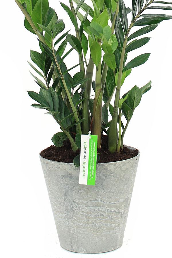 Artstone topfe mit Zimmerpflanze