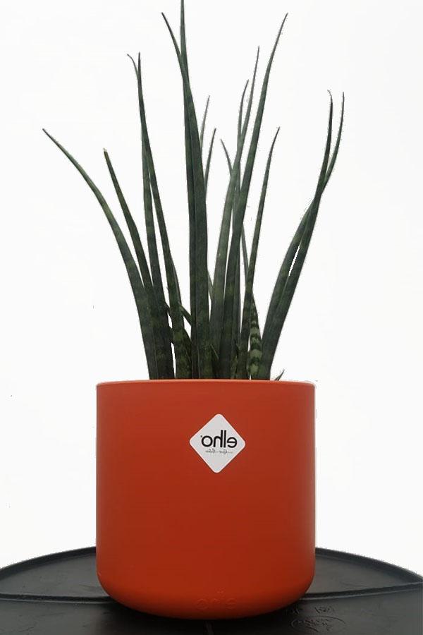 Elho Pflanzgefäße kaufen online