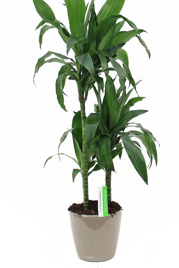 lechuza pflanzgefaesse mit zimmerpflanze