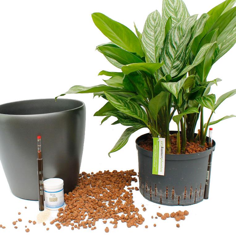 Hydrokultur Informationen 123zimmerpflanzen