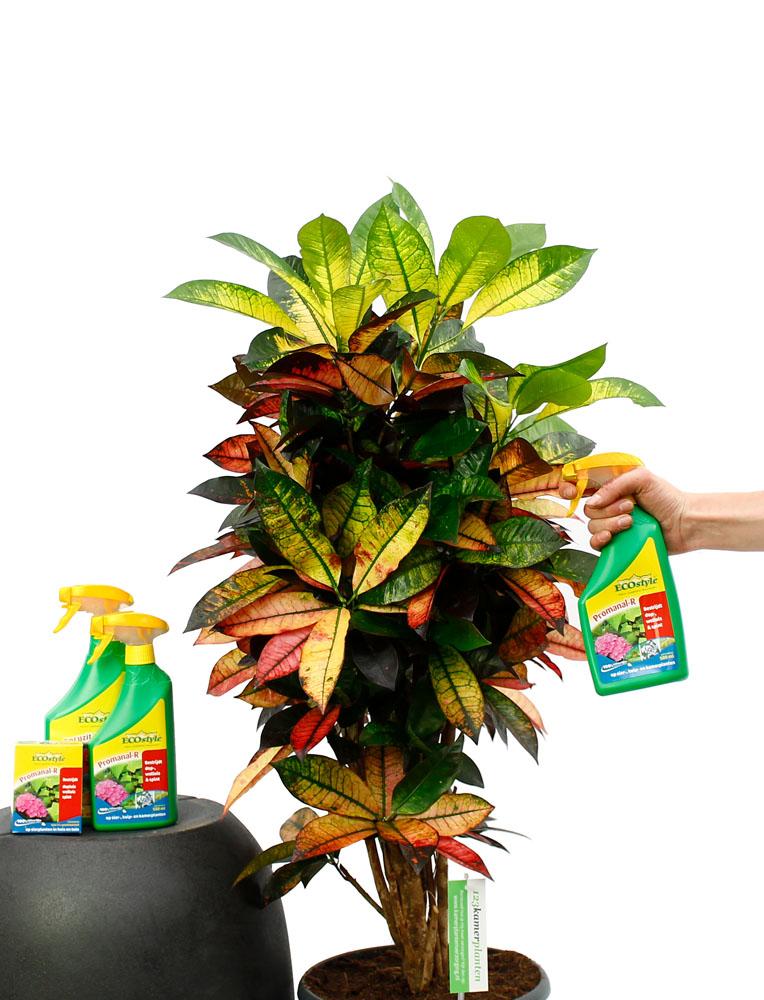 Zimmerpflanze genesen