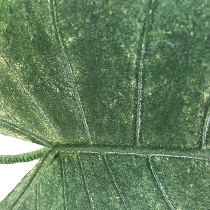 Spinnmilben Bekämpfung 123zimmerpflanzen