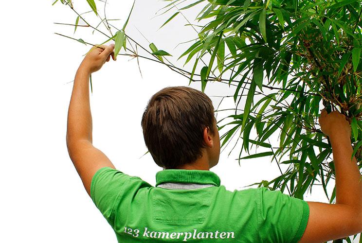 Bambus Wartung