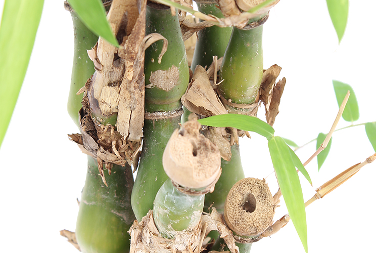 Düngen für Bambus
