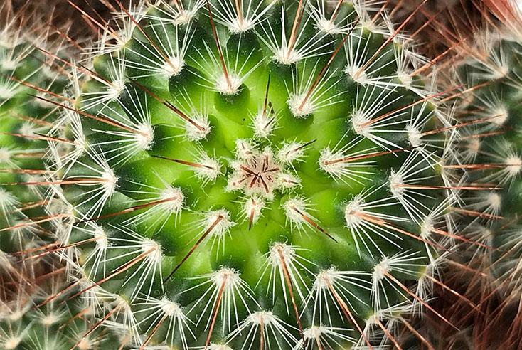 Düngen für Kaktus